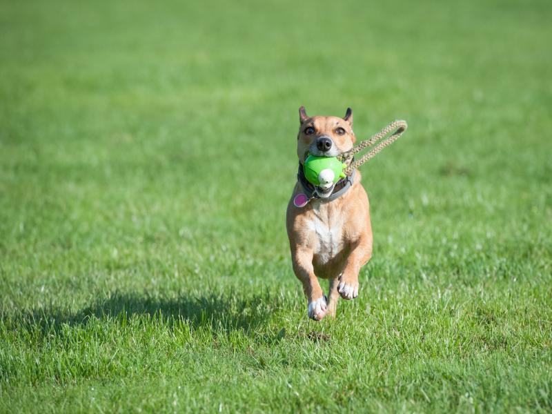 Czy należy karać psa?
