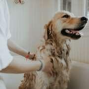 Pies u weterynarza – co musisz wiedzieć przed pierwszą wizytą?