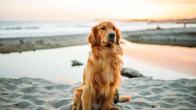 Czym wyróżnia się specjalna karma dla psa seniora?